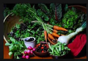 salins-dental-health-earth-day-garden